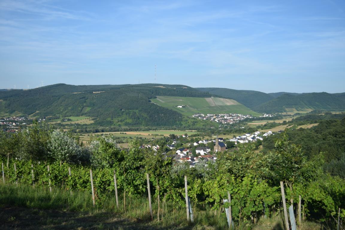 Abustum-Projekt: Wein im Wald